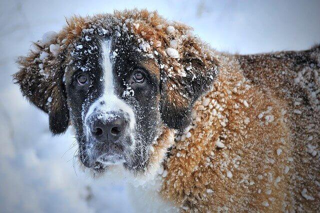 Kış Geldi, Sokak Hayvanları Ne Yapacak?